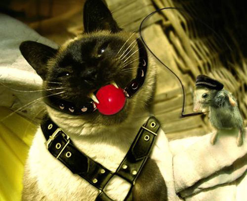 Ballgagged cat