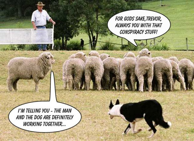 Conspiracy theory sheep