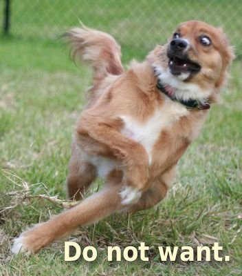 Do not want dog
