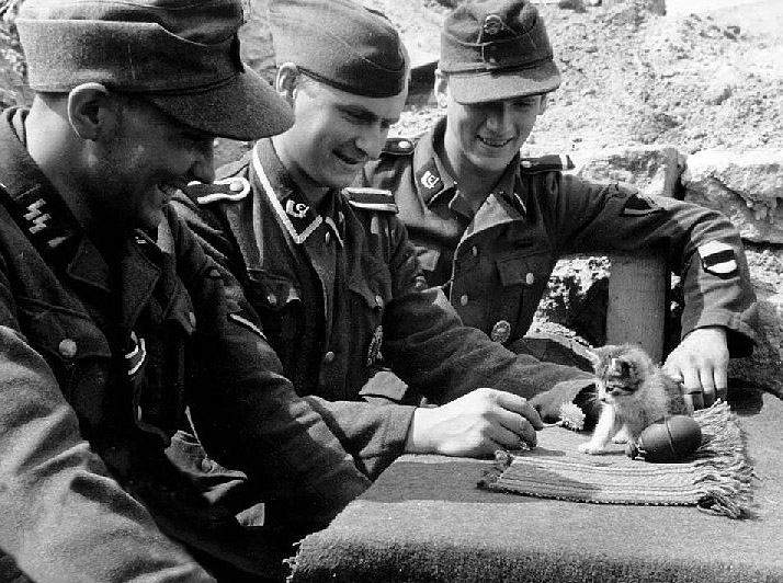 Nazis, a kitten, and a grenade