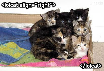 Lolcats, aligned right