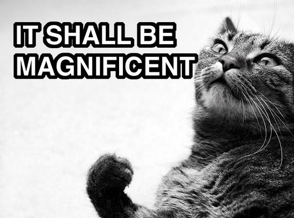 """It shall be magnificent!"" cat"